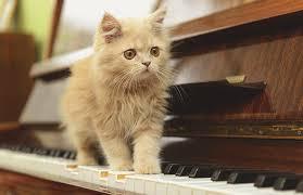 """Résultat de recherche d'images pour """"images chats et musique"""""""