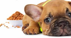 Best Food For French Bulldog Puppy Dogs Top Tips And Brand