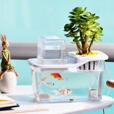 Office aquariums Dental Image Is Loading Ecologicalfishplantsymbioticminiaquariumsfishtank Pinterest Ecological Fish Plant Symbiotic Mini Aquariums Fish Tank Home Office