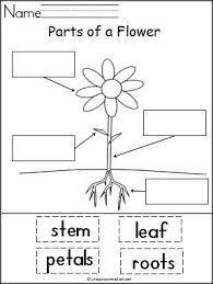 Small Picture Best 20 Flower parts ideas on Pinterest Parts of a flower