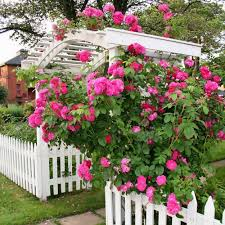 Small Picture english rose gardens pictures Rose Garden Design english
