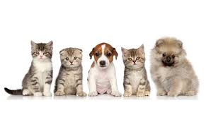 dogs and cats wallpaper. Contemporary Wallpaper 1280 X 764 On Dogs And Cats Wallpaper