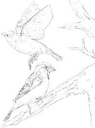 Eastern Bluebird Coloring Page Blue Bird Pages Free For Adults