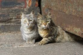 animal abuse cats. Contemporary Cats Police Are Investigating Animal Abuse Allegations At Industry City After An  Exterminator Hired By The Complex In Animal Abuse Cats A