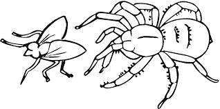 Small Picture Free Printable Spider Coloring Pages For Kids Clip Art Library