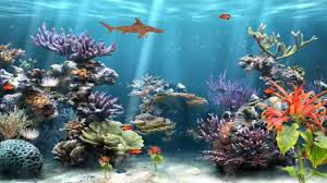 animated moving fish wallpapers. Coral Reef Aquarium Animated Wallpaper Httpwwwdesktopanimatedcom YouTube In Moving Fish Wallpapers