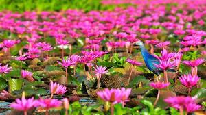 lake thale noi lake in thailand