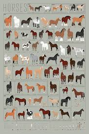 Pop Chart Horses A Chart Of Notable Breeds Poster Print 24 X 36 Multicolored
