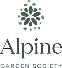 Alyssoides sinuata - Alpine Garden Society