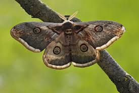 What Did Moths Do Before Lights Why Are Moths Attracted To Light Aruba Today