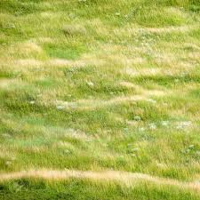 wild grass texture. Square Background Of Summer Grass Texture In Wild Meadow Stock Photo - 5424860 G