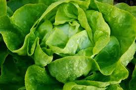 Cabbages Leafy Vegetables And Bulb Vegetables En Lebosol Dünger