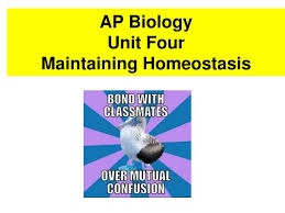 What Is Homeostasis In Biology Ppt Ap Biology Unit Four Maintaining Homeostasis