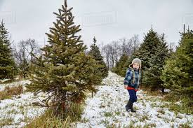 Young boy walking through Christmas tree farm; Stoney Creek, Ontario, Canada