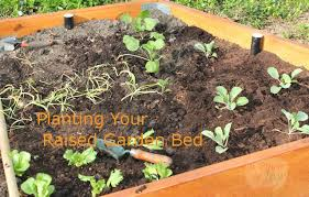V Planting Your Raised Garden Bed  Square Foot Gardening Plan A Pinch Of Joy