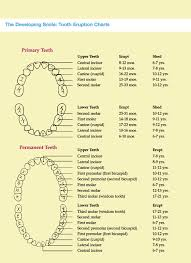 Canine Tooth Eruption Chart Tooth Eruption Chart How Is Your Child Progressing