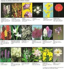 Fresh Flower Identification Chart 2 Flower