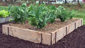 Small Picture Plain Decoration Raised Bed Designs Best Raised Bed Garden Design