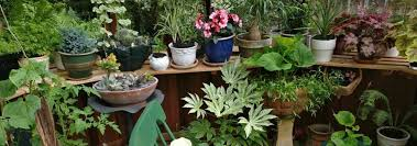 here we present a hand picked selection of choice and unusual houseplants suitable for growing indoors a windowsill is often just as good as a