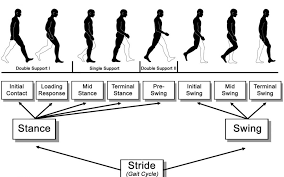 Phases Of The Gait Cycle Gait Analysis Protokinetics