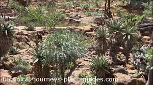 Small Picture Succulent Gardens and Container Gardening Tips