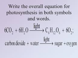 write a word equation for photosynthesis thing