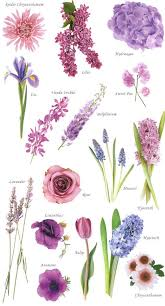 flowers types flower names color flower collection and flowers