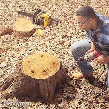 fh00apr stmrem 01 2 tree stump removal