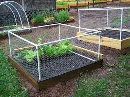 how to keep squirrels out of garden. Great How To Keep Squirrels Out Of My Garden Have Raised Beds With Wire E