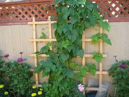 Kitchen Garden In India Easy Vertical Gardening Ideas For Beginners Dengarden