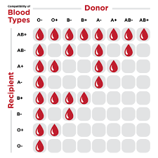 Who Can Donate Blood To Whom Chart Who Can Accept Blood From Whom Couples Therapy