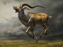 Small Picture ENCYCLOPEDIA OF ANIMAL FACTS AND PICTURES KUDU