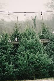 PHOTO ALBUM Of The 2016 Main Street Christmas Tree Cutting Christmas Tree Cutting Nj