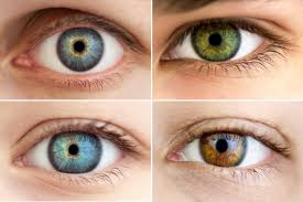 Eye Color Chart All About The Human Eye Color Chart