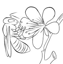 Free printable bumble bee coloring pages for kids. Free Printable Bee Coloring Pages For Kids