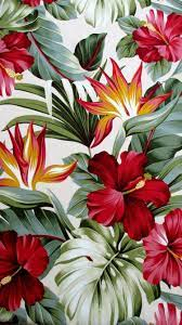 Tropical Flowers Tumblr Wallpapers ...
