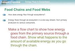 Lesson Overview Lesson Overview Energy Flow In Ecosystems