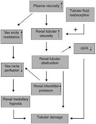 Gfr Rate Chart Contrast Induced Nephropathy Risk Factors Clinical