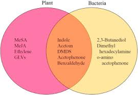 Bacteria And Viruses Venn Diagram Flying Whispers Of Inter Kingdom Conversation A