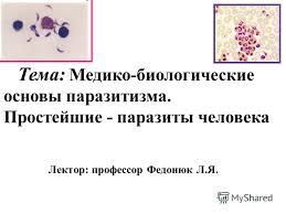 Паразитические простейшие паразиты простейшие реферат Простейшие одноклеточные организмы размерами от 3 до мкм находящиеся на более высоком уровне организации по сравнению с бактериями