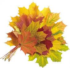 """Результат пошуку зображень за запитом """" картинки букет  листя осінь"""""""