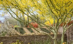 desert botanical garden phoenix arizona palo verde