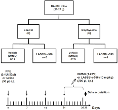 Pathophysiology Of Emphysema Flow Chart Flowchart And Timeline Of Study Design Control C Four