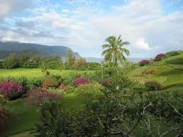 backng hawaii