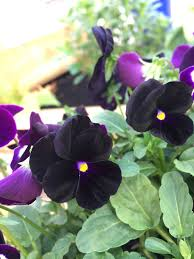 i don t really have much else to say on these i mean bedding plants are bedding plants there are lots of diffe types and they really help to inject a
