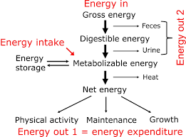Energy Expenditure Chart For Activity 7 5 2 Flow Chart Of Energy 7 5 Energy Expenditure