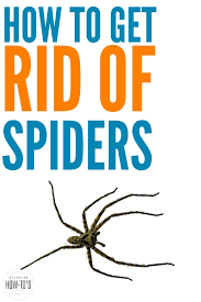 how to get rid of spiders my house used to get big ugly spiders all