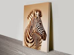 zebra in sepia animal wall art on canvas on sepia canvas wall art with zebra sepia canvas wall art prints wollongong