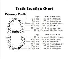 Children S Tooth Chart Letters 66 Eye Catching Baby Teeth Chart Timeline