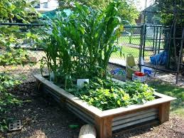 raised vegetable garden bed layout raised bed vegetable garden elegant vegetable garden beds raised vegetable gardens